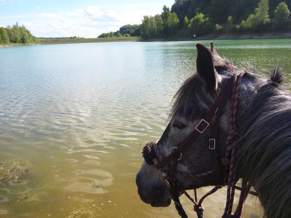 Balade à cheval chez Crinière au vent