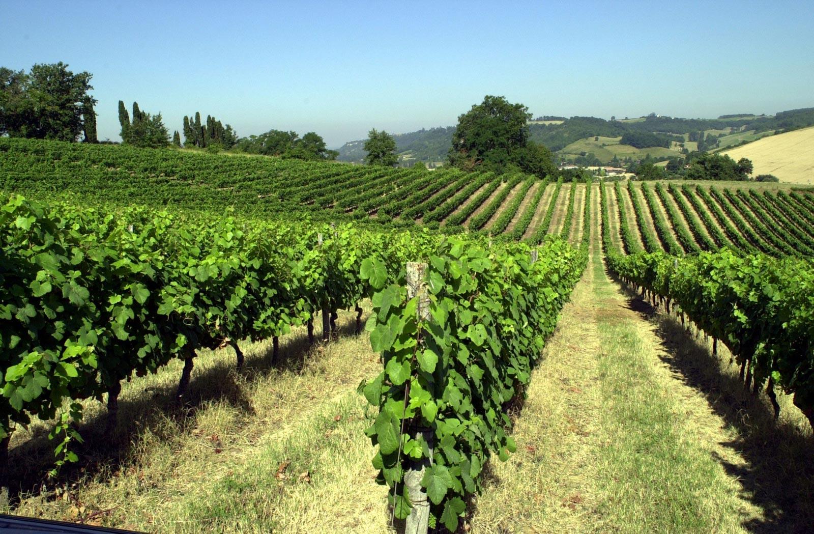 Côtes du Brulhois